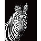 Animal zèbre Noir et Blanc mignonAnimal zèbre Noir et Blanc mignon5D DIY numérique Peinture_PréimpressionToile_Enfants Adultes Dessin abstrait Toile Avec Des brosses décoratio—40x50cm sin Marco