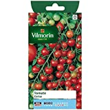 Vilmorin - Sachet graines Tomate cerise