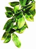 Exo Terra Plastic Terrarium Plant, Small, Mandarin