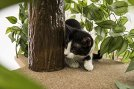 On2-Pets-CatHaven-Cat-Condo-Square-Base-Medium-Bundle