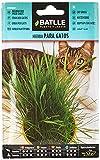 Semillas Aromticas - Hierba para gatos - Batlle