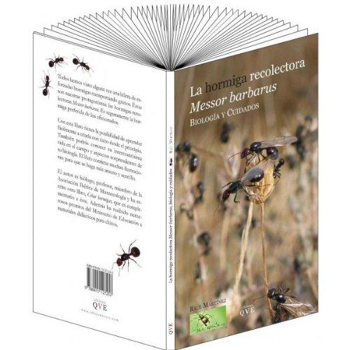 La hormiga recolectora Messor Barbarus: biología y cuidados