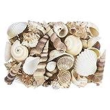 Potpourri | Conchiglie | 450 g | Naturale | Vari tipi di conchiglie