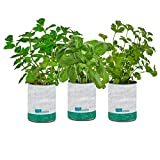 Back to the Roots New Kitchen Garden Complete Herb Kit Variety Pack of Basil, Mint, and Cilantro Seeds