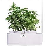 Odyseed - Potager d'Intérieur 100% Bio - Cultivez Vos Herbes aromatiques - Basilic...