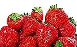 Graines de fraises pour plantes de fruits rouges et grimpantes - 100 graines de fruits de fraises rouges