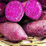 Viola patata dolce Semi, 50pcs / bag patata dolce Semi Forte di sopravvivenza Rinfrescante Viola patate Facile Coltivare semi di verdure per giardino