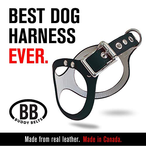 BUDDY BELTS Original Durable Classic Leather Dog Harness for Large Dogs (Black, Size 10)