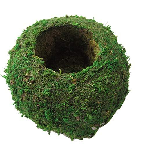 Forart 6 Inch Natural Planter Weave Moss Ball Kokedama Planter Bonsai...