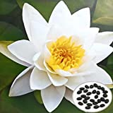 MaMaison007 10pcs Blanco Bol Loto Semillas jardn Plantas acuticas