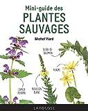 Mini-guide des plantes sauvages
