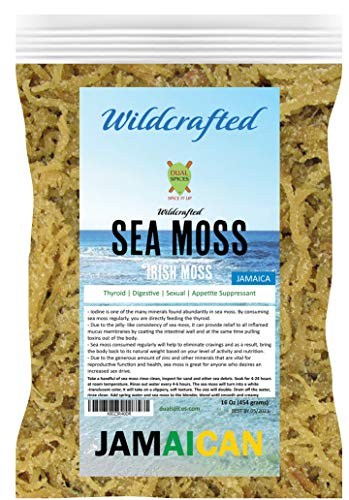 DualSpices Irish Sea Moss 16 Oz, 100% Wildcrafted Wild Sea Harvested NO Chemicals Or Preservatives, Harvested from The Protected Carribean Sea Directly from Jamaica - Non-GMO, Vegan, Superfood