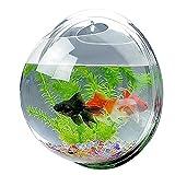 Candora Boule aquarium à accrocher au mur - Acrylique -...