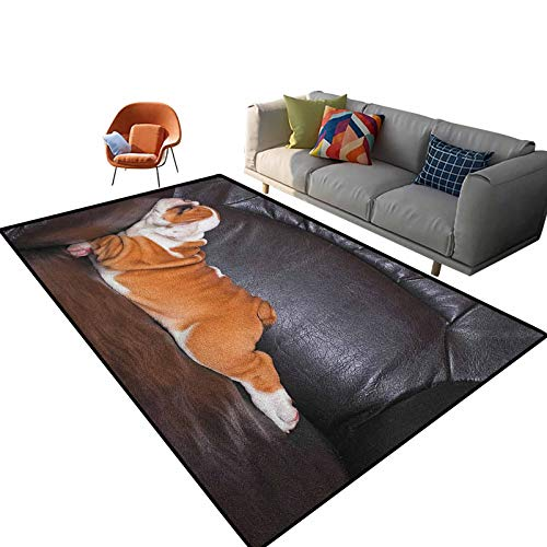 English Bulldog Modern Family Room Carpet Puppy Resting on a Sofa Funny Animal Photography Cute Canine Carpets for Home, Nursery, Bed and Living Room 5'x 8'