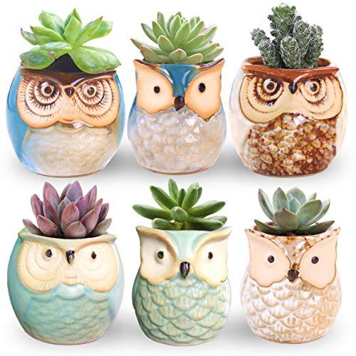 ROSE CREATE 6 Pcs 2.5 Inches Owl Pots, Little Ceramic...