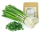 1300+ Long Green Scallion Seeds for Planting, Non-GMO Organic Heirloom Scallion Seeds