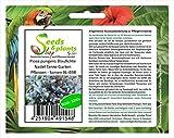 Uds. - 1000x Picea Pungens Abeto Azul Aguja Abeto Jardn Plantas - Semilla XL-B98 - Seeds Plants Shop Samenbank Pfullingen Patrik Ipsa