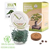 GROW2GO Bonsai Kit incl. eBook GRATUITO - Set con mini invernadero, semillas y tierra - idea de regalo sostenible para los amantes de las plantas (Tamarindo)