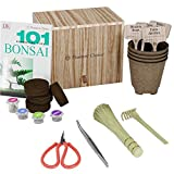 Premium Bonsai Starter Kit + 101 Essential Tips Book and Complete Toolkit - in Unique Wooden Gift Box - Easily Grow 4 Trees from Seed