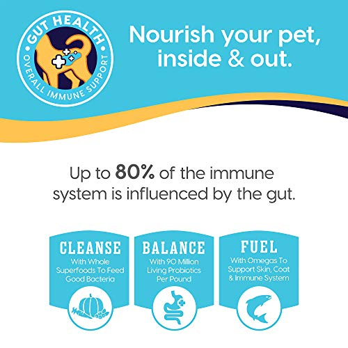 Solid Gold - Let'S Stay In Salmon - Grain-Free - Indoor Formula Dry Cat Food with Superfoods - Hairball Control - Protected Probiotic Blends - Holistic Food for Adult Cats - 12 Lbs