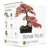 Plant Theatre Bonsai Trio Kit Ensemble de 3 bonsaïs à Faire Pousser