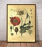 Encyclopédie des plantes médicinales affiche décoration de la maison-A3 30x42 cm sans...