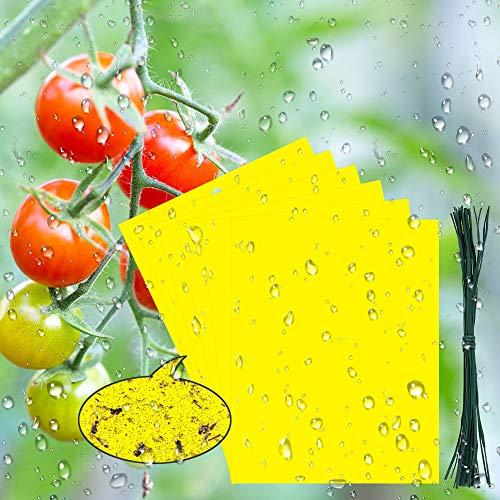 BUZIFU 30 Pezzi Trappole per Insetti Volanti, Biadesivo Trappole Ecologiche per Insetti, Trappole Appiccicose per Parassiti delle Piante Non-Tossice, con Accessori Fissi (19,8 * 15 cm)