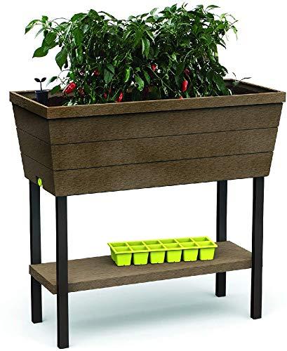 Keter - Mini huerto en casa Urban Bloomer con base para cultivo, Color marrón