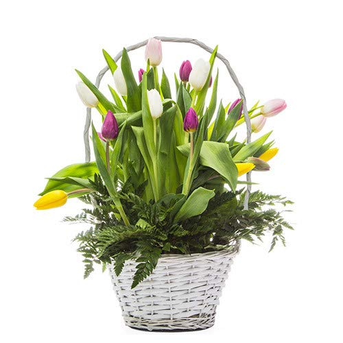 Florclick - Cesta de tulipanes - Flores frescas a domicilio en 24h y ENVÍO GRATIS