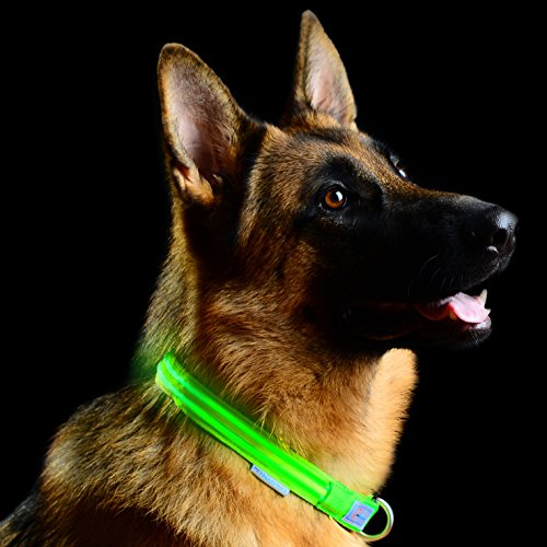 Pet Industries Metal Buckle LED Dog Collar, USB...