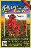 Everwilde Farms - 2000 Cardinal Flower Native Wildflower Seeds - Gold Vault Jumbo Seed Packet