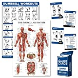 Palace Learning 3 Pack: Dumbbell Workouts + Muscular System Anatomy Poster Set + Dumbbell Exercise Playing Cards