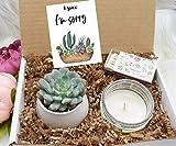 Gift for Women - I SUCC I'm Sorry Succulent - Apology Gift Box - Sunshine - Regrets Gift - I'm Sorry Gift - Apology - Apology Gift Ideas (XBE3)