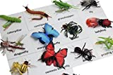 Curious Minds Busy Bags Montessori Insect Animal Match Cards and Figurines. Nomenclature Science Work