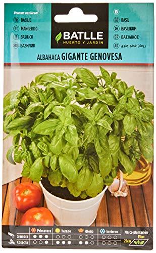 Semillas Aromáticas - Albahaca Gigante Genovesa - Batlle