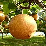梨農家おすすめの梨の苗木販売店・専門店一覧【まとめ】 163