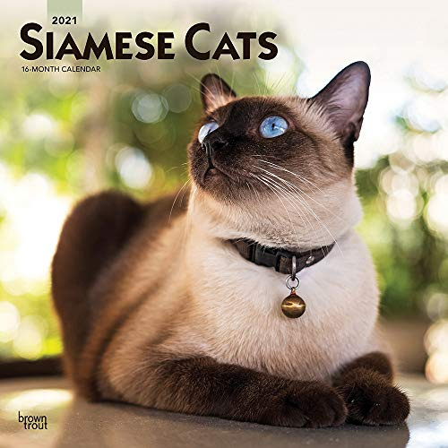 Siamese Cats 2021 12 x 12 Inch Monthly Square Wall Calendar, Animals Cat Feline (English, French and Spanish Edition)
