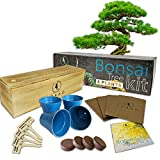 Bonsai Tree Starter Kit | Grow 4 Bonsai Trees | Beginner Friendly | Complete DIY Growing Kit | Indoor Growing Plant | Wooden Box | Perfect Gift Idea