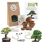 Bonsai Kit incl. eBook GRATUITO - Set con macetas de coco, semillas y tierra - idea de regalo sostenible para los amantes de las plantas (Granada Enana + Tamarindo)