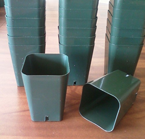 30 Seed Starting - 2 1/4' Square X 3 1/4' Extra Deep Plastic Rose Pots Durable Reusable