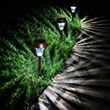 Enchanted Spaces Bronze...image