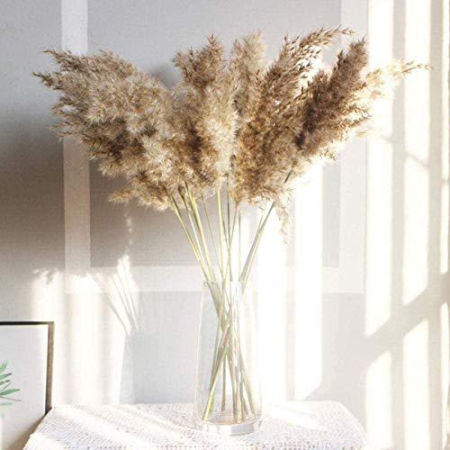 Bumen 30 /50Piezas Pampas Secas, 50 cm Flores Secas Naturale