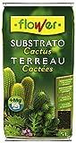 Sustrato Cactus plantas crasas