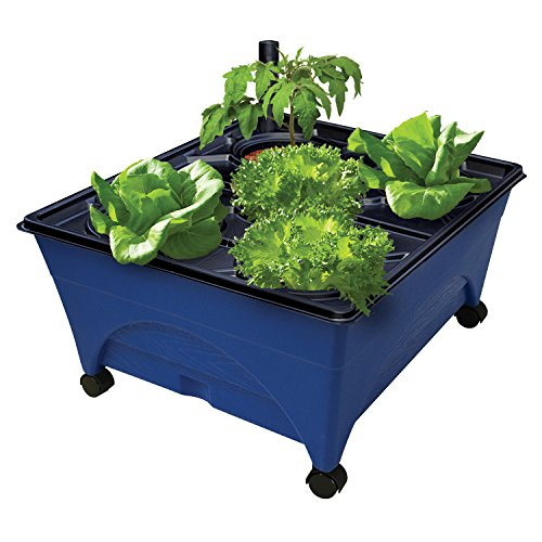 """Emsco Group 2370 Hydropickers Compact 24"""" x 20"""" Footprint – Mobility Provided by Casters Non-Electric Hydroponics Grow Box, Blue"""