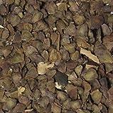 100 Semilla Jacaranda Bonsi Paquete Jacaranda Mimosifolia