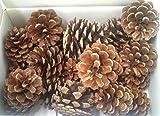 石原商事 松ぼっくり(木の実)50個 自然素材 国内産