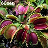 Uticon 60 / 120pcs Dionaea Del Atrapamoscas De Venus Las Semillas De La Planta CarnVora Bonsai Decor - 60pcs Dionaea Semillas