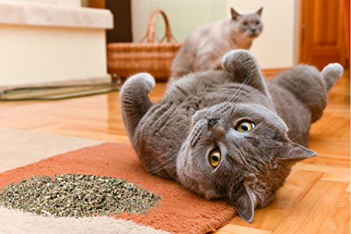 Purple Haze Catnip, Premium Blend Safe for Cats, Infused with Maximum Potency Your Kitty is Sure to Go Crazy for (1 Cup)