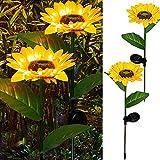 DAZZLE BRIGHT Sunflower...image