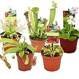 Exotenherz - Set de inicio de plantas carnvoras - 5 plantas